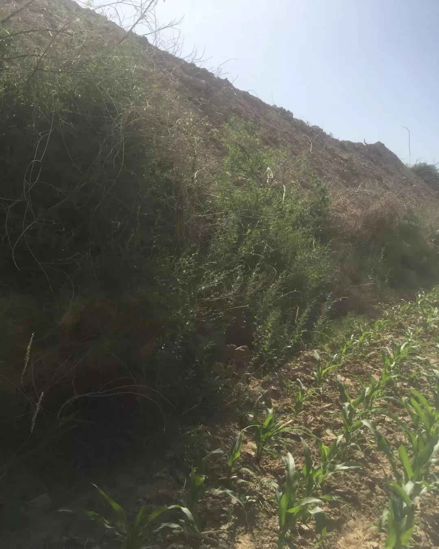 原平东社镇贵儒村:黑砖窑污染环境,窑主是村长儿子?